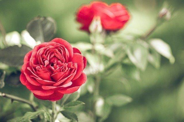 San Valentín no es sólo para los enamorados